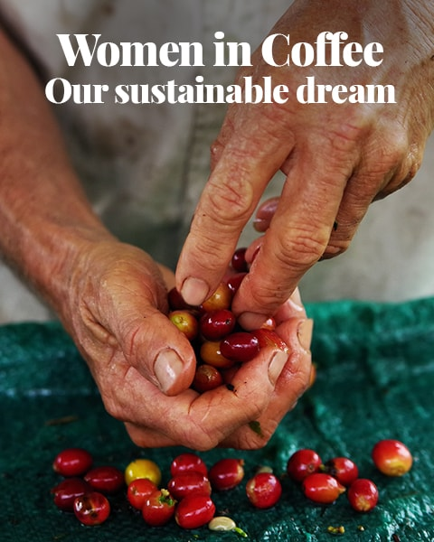 Our sustainable dream